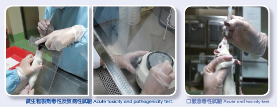 Acute toxicity and pathogenicity (Left picture) Acute oral toxicity test (Right picture)