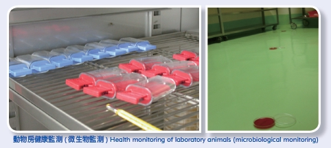 Health monitoring of laboratory animals (microbiological monitoring)