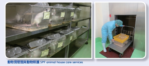 SPF animal house care services